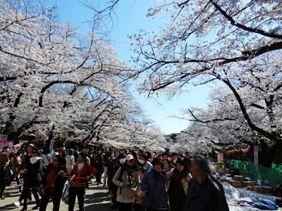 上野公園2019_花見02_s.jpg