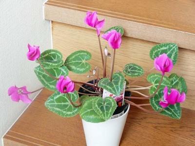我が机上の花々DSCN6116_m.jpg