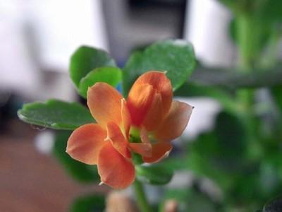 我が机上の花々IMGA0048_m.jpg
