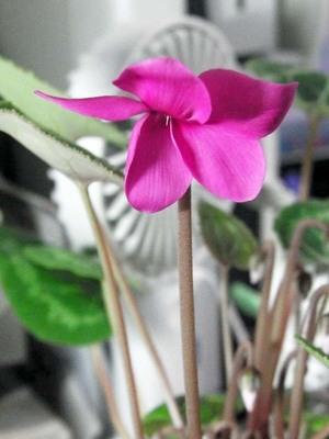 我が机上の花々IMGA0092_m.jpg