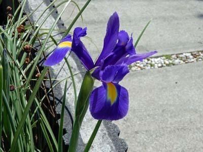 我家の花々_DSCN5800_s.jpg