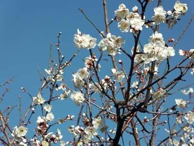 春に向けて2020年_IMGA0048_s.jpg
