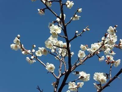 春に向けて2020年_IMGA0050_s.jpg