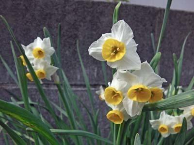 春に向けて2020年_IMGA0062_s.jpg