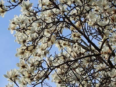 春の訪れ第3弾2020年_DSCN5679_s.jpg