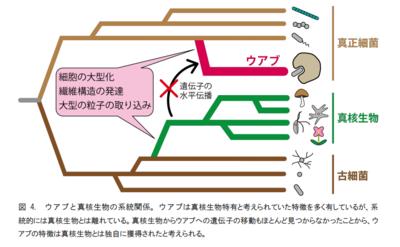 生物の系統図.png