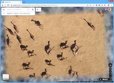 GoogleMaps_ラクダの群れ_s.jpg